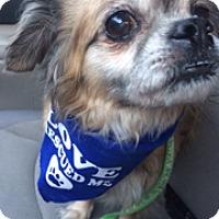Adopt A Pet :: Shelton - Ft. Lauderdale, FL