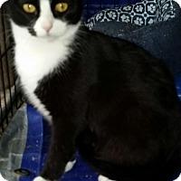 Adopt A Pet :: Antebella - Glendale, AZ