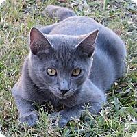 Adopt A Pet :: Baylor - Gonzales, TX