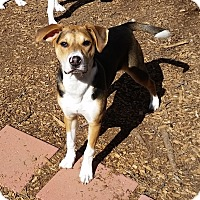 Adopt A Pet :: Emma - Bardonia, NY
