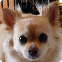 Adopt A Pet :: Zipper - MINNEAPOLIS, KS