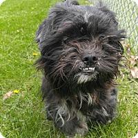 Adopt A Pet :: 1-3 Mittens - Triadelphia, WV