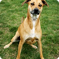 Adopt A Pet :: Cheyenne - Appleton, WI