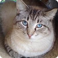 Adopt A Pet :: Vincent - Delmont, PA