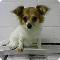 Adopt A Pet :: MARTIKA - Houston, TX