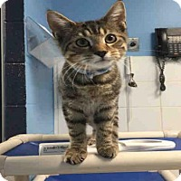 Adopt A Pet :: KETTLE - Canfield, OH