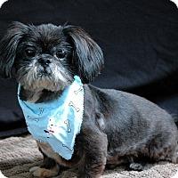 Adopt A Pet :: Pablo - Lawrenceville, GA