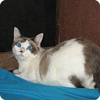 Adopt A Pet :: Sapphire 3 - Bulverde, TX