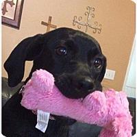 Adopt A Pet :: Scarlett - Mobile, AL