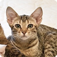 Adopt A Pet :: Keiko - Davis, CA