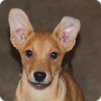 Adopt A Pet :: Austin - Phoenix, AZ
