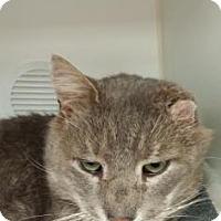 Adopt A Pet :: Morris - Reisterstown, MD