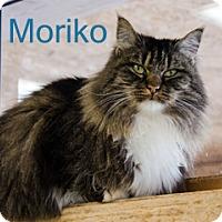 Adopt A Pet :: Moriko - Hamilton, MT