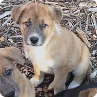 Adopt A Pet :: Reindeer Babies: Prancer - Doylestown, PA