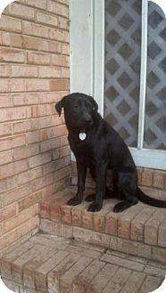 Labrador Retriever Mix Dog for adoption in Tunbridge, Vermont - Shelly