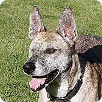 Adopt A Pet :: Moria - Santa Rosa, CA