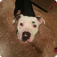 Adopt A Pet :: Dini - Owasso, OK