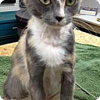 Adopt A Pet :: June - Monroe, GA
