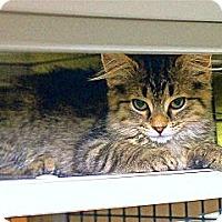 Adopt A Pet :: Otis - Victor, NY