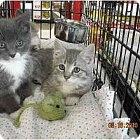 Adopt A Pet :: Allen - Riverside, RI