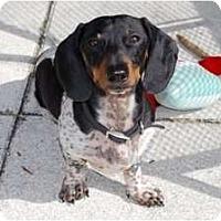 Adopt A Pet :: Fonzie - Minneola, FL