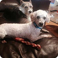 Adopt A Pet :: Nigel - Marietta, GA
