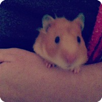 Adopt A Pet :: Hazel - Bensalem, PA
