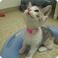 Adopt A Pet :: Aspen - Medina, OH