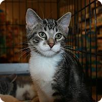 Adopt A Pet :: Brian - Rochester, MN
