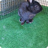 Adopt A Pet :: Flash - Chula Vista, CA