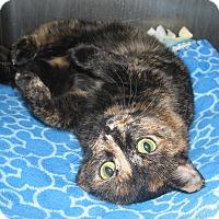 Adopt A Pet :: 16781B - Hobart, IN