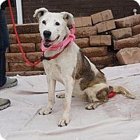 Adopt A Pet :: Candy - Mt Vernon, NY