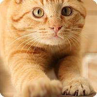 Adopt A Pet :: Mack - McCormick, SC