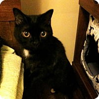 Adopt A Pet :: Matilda (bonded to Olivia) - Richmond Hill, ON