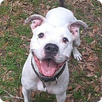 Adopt A Pet :: Chevy - Port Charlotte, FL