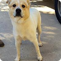 Adopt A Pet :: Rocko - Aurora, CO