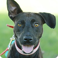 Adopt A Pet :: Raven - Rockville, MD