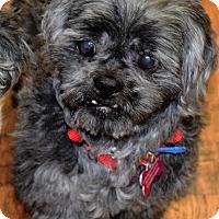 Adopt A Pet :: Casey - Fairfield, OH