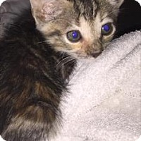 Adopt A Pet :: Quila - Austin, TX