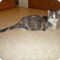Adopt A Pet :: Sofia - Montello, WI