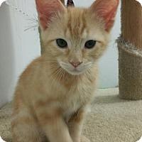 Adopt A Pet :: Finnagan - Yorba Linda, CA