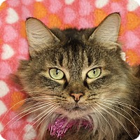 Adopt A Pet :: Heaven - Jackson, MI