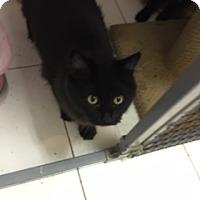 Adopt A Pet :: Sapphire - Elk Grove, CA