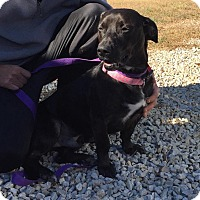 Adopt A Pet :: Mooney - Harrisonburg, VA