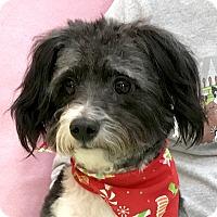 Adopt A Pet :: Callie - Evansville, IN