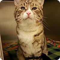 Adopt A Pet :: Baxter - Shinnston, WV