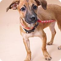 Adopt A Pet :: Francesca - Sudbury, MA
