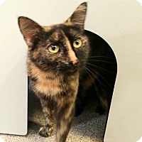 Adopt A Pet :: Athena - Sarasota, FL