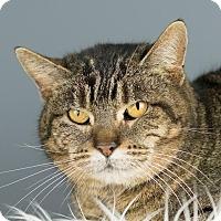 Adopt A Pet :: Bertha - Columbia, IL