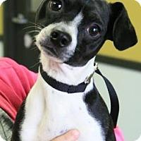 Adopt A Pet :: Wilbur 3424 - Toronto, ON